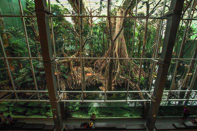 Mangrove géante au Musee des Sciences CosmoCaixa Barcelone.