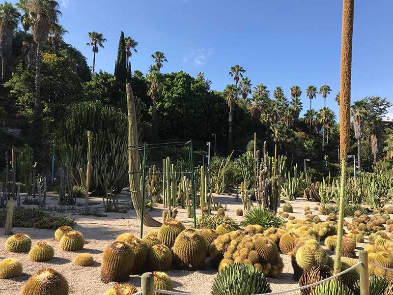 velo barcelone evjf jardin cactus