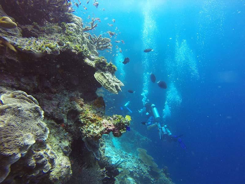 fonds marin plongee sous marine Barcelone