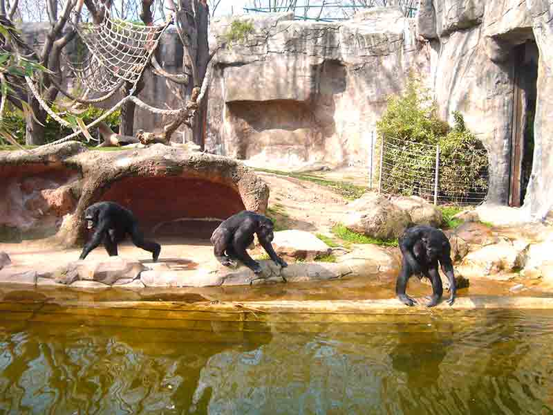 singes au zoo de barcelone