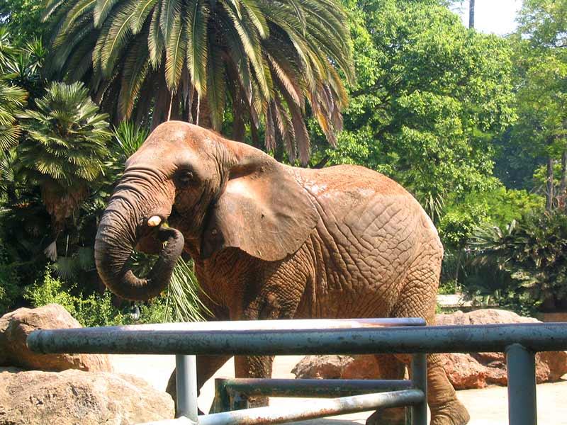 elephant zoo Barcelone