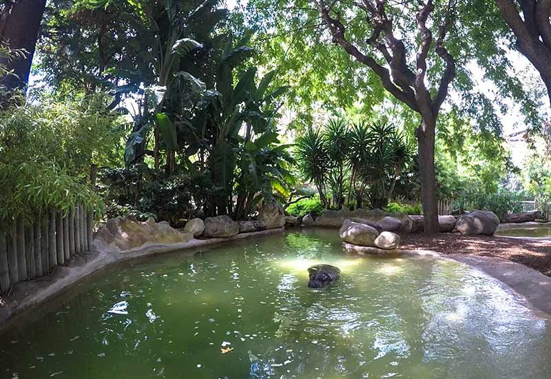 hippopotame au zoo de barcelone