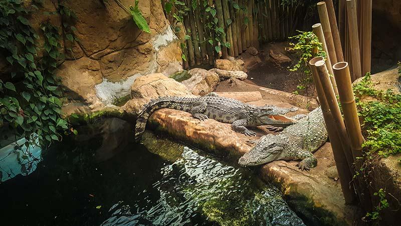 crocodile zoo de barcelone