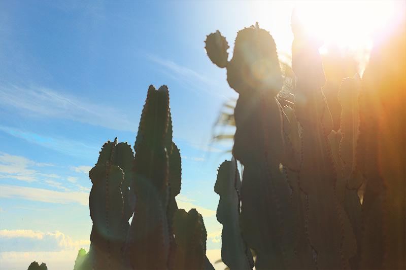 jardin cactus barcelone