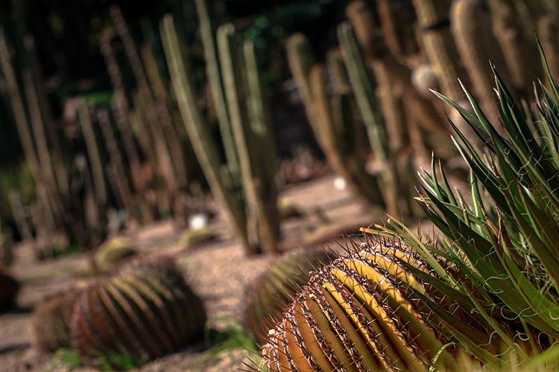 cactus mossen barcelone