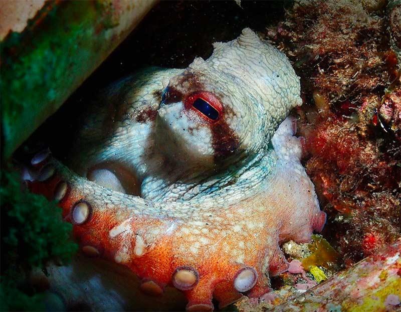 plongee sous marine Barcelone