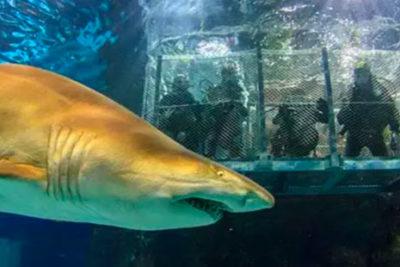 plongee sous marine Barcelone shark