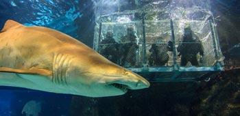 aquarium de barcelone plongee requin shark dive